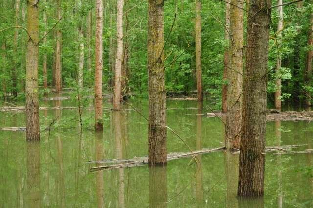 Több tízezer hektár erdőt öntött el a Duna