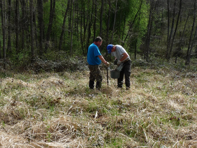 Három millió csemete került tavasszal a Vas megyei állami erdőkbe