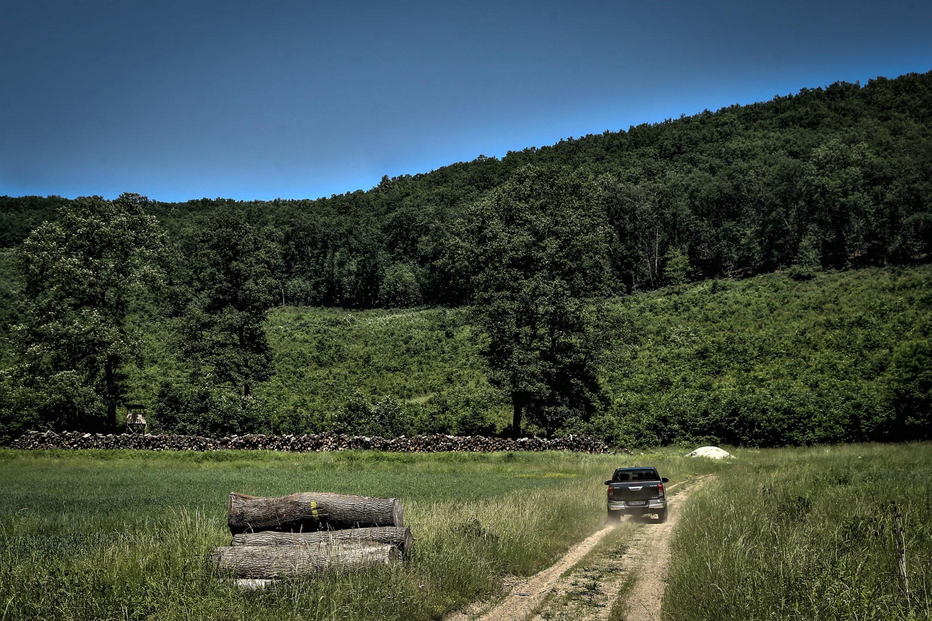 Ökológiailag egyre stabilabb erdők jönnek létre hazánkban