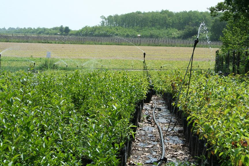 Újabb könnyítések segítik az erdősültség növelését