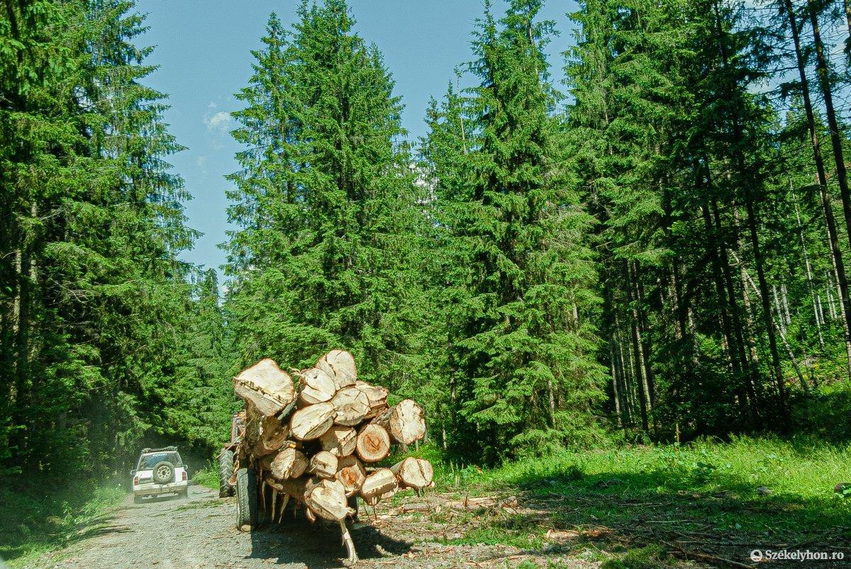Exporttiltás helyett ellenőrzött erdőgazdálkodás
