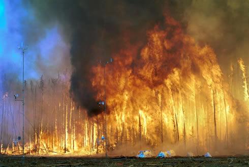 100 évre lesz szükség a leégett szibériai erdők regenerálódásához