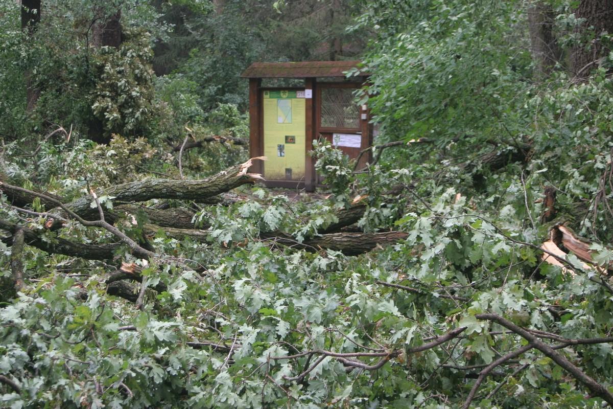 Vasárnap súlyos viharkárt szenvedett a Gyula-Városerdei Parkerdő