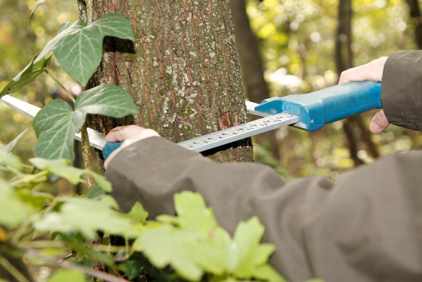 Tapasztalt erdőmérnököt keres az NFK Erdészeti Főosztály az EMMRE csapatába