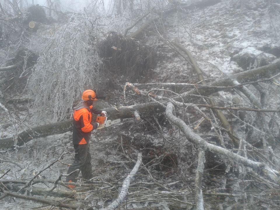 Életveszélyes a hazai erdők látogatása - helyzetkép az erdőkárokról