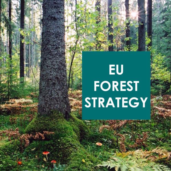 Magyarul véleményezhető az Európai Bizottság új uniós erdőgazdálkodási stratégiája - április 19-ig!