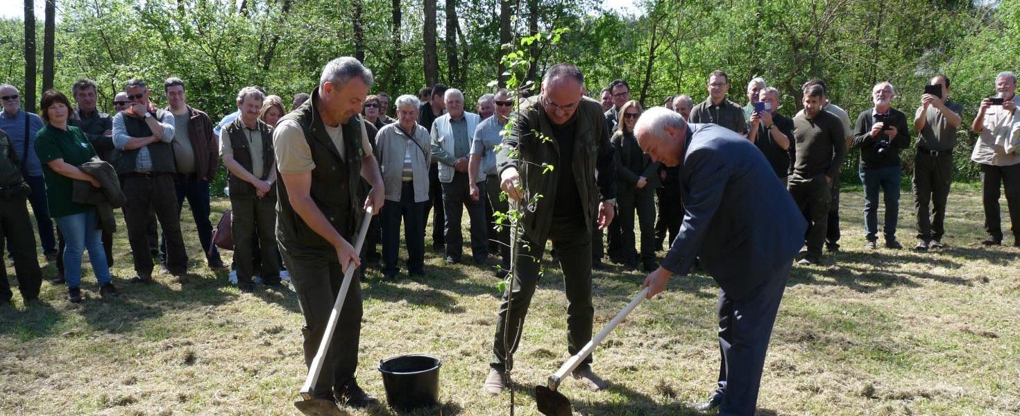 Az idei év fáját is elültették az erdészek a Csónakázó-tónál