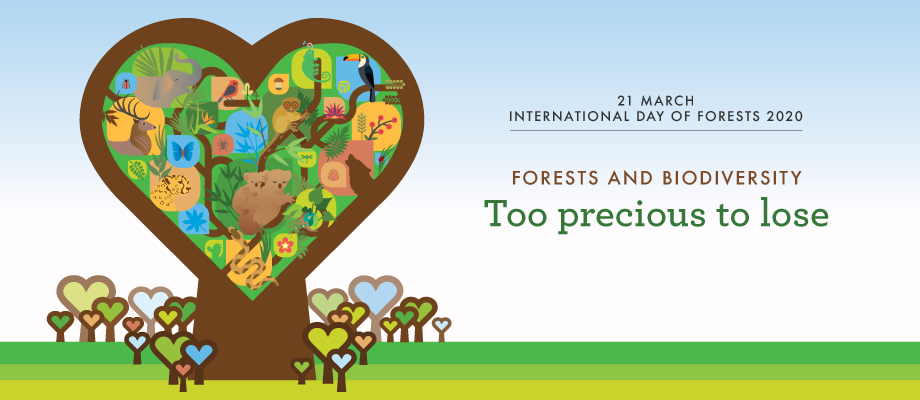 Az erdők és a biodiverzitás 2020-ban az Erdők Nemzetközi Napja témaköre - elérhető a FAO spotfilm!