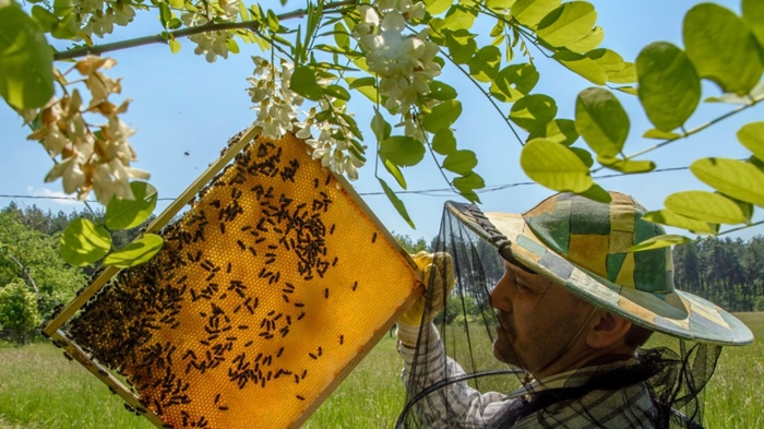 A méhészeti ágazat megsegítését sürgette a magyar agrárminiszter Brüsszelben