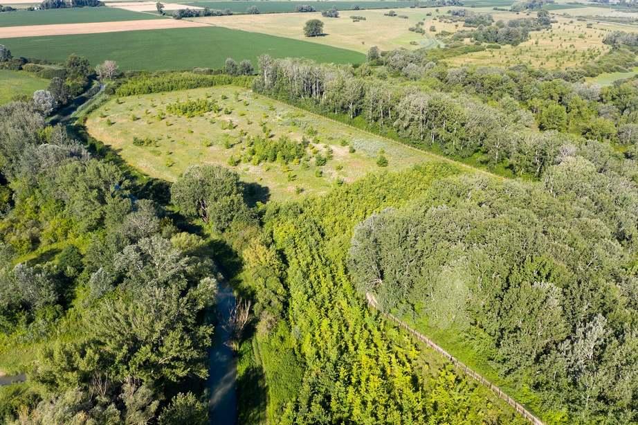 Nelder-körök a Győr környéki erdőkben