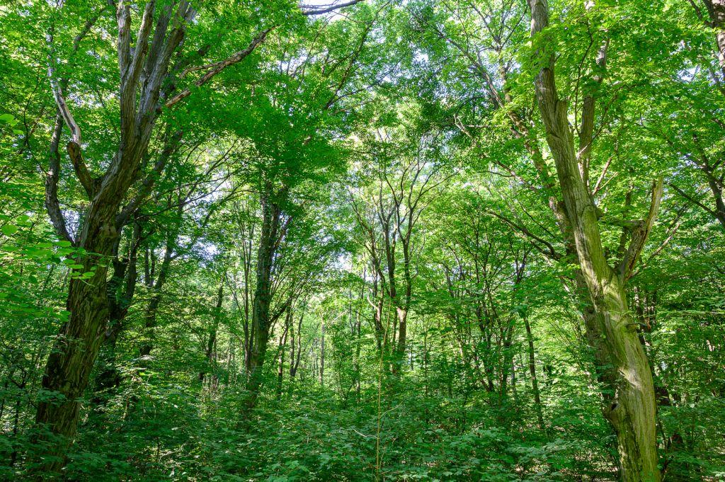 A Pilisi Parkerdő és az Atenor összefogása a természetesebb, ökológiailag értékesebb erdőért - videó