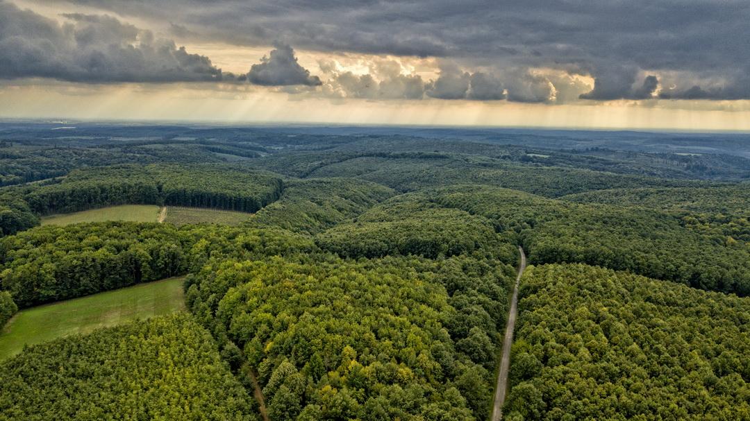 Jelentős siker az osztatlan közös földtulajdon felszámolásában