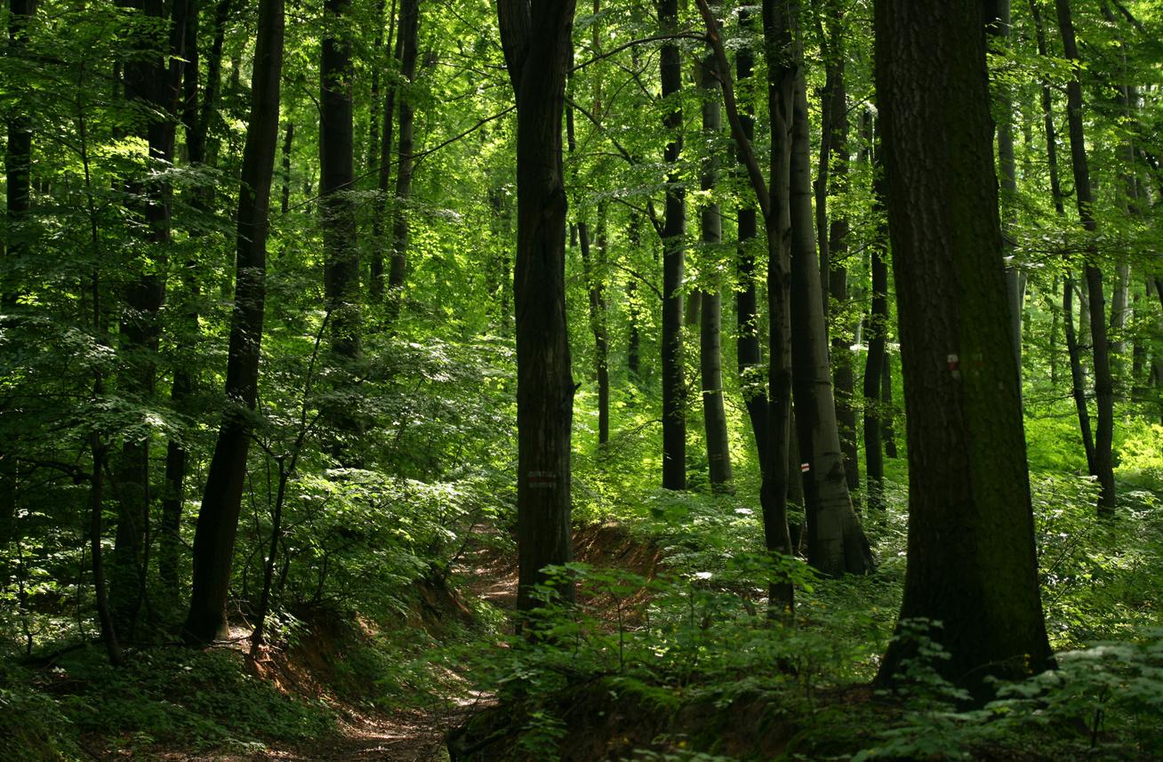 Elfogadhatatlan az Európai Bizottság Új Erdő Stratégiája