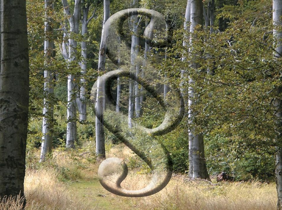 Módosultak egyes erdészeti hatósági eljárások, bejelentések, nyilvántartások eljárási szabályai