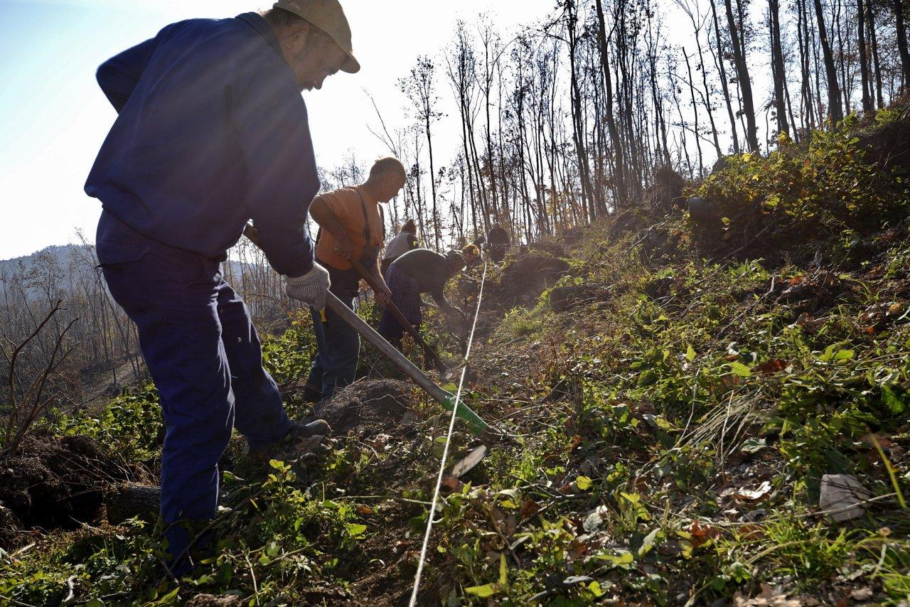 15 hektár erdőt telepítenek Borsod-Abaúj-Zemplén megyében