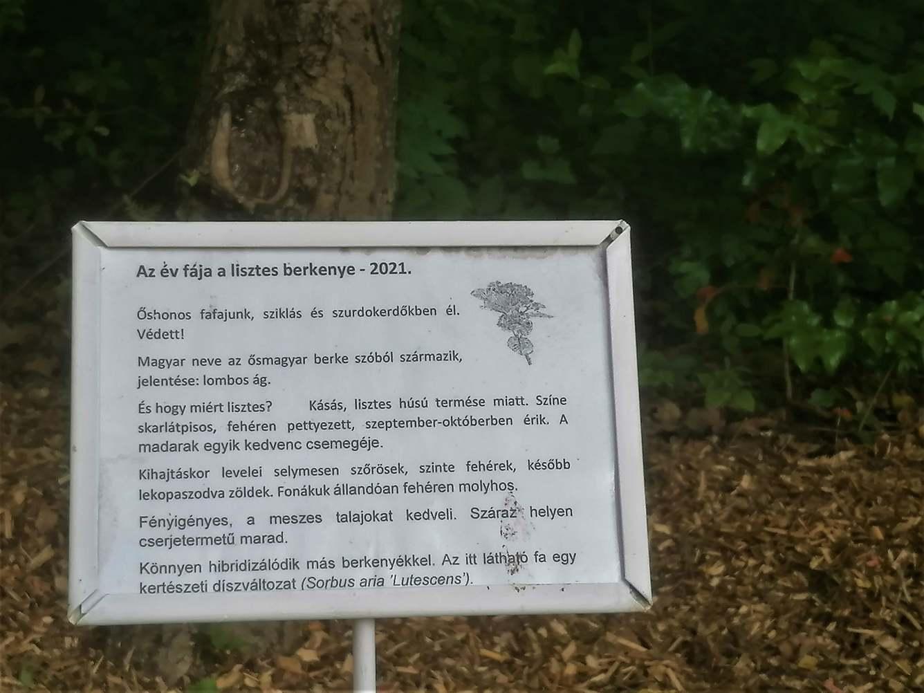 Az Év fája is látható a szépülő, megújuló Kecskeméti Arborétumban