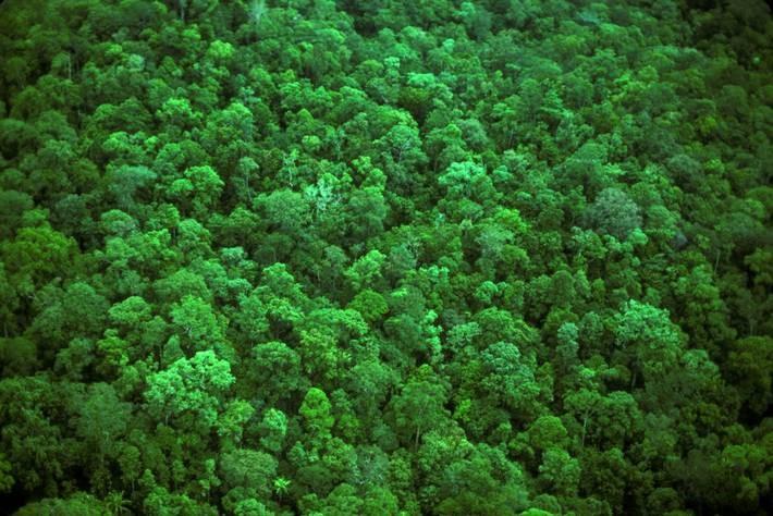 A FAO támogatja az erdészeti és földhasználati adatok nyomon követését