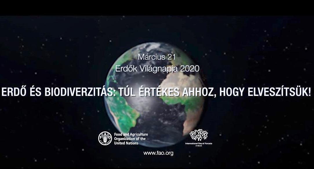 Közeleg az Erdők Nemzetközi Napja - Már magyarul is elérhető az idei FAO kisfilm