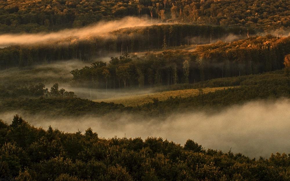 Tiszteletben kell tartani a tagállami hatásköröket az új Uniós Erdőstratégia kialakításakor