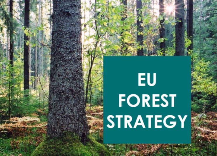 Magyarul is elérhető az Európai Bizottság Erdészeti Stratégia javaslattervezete