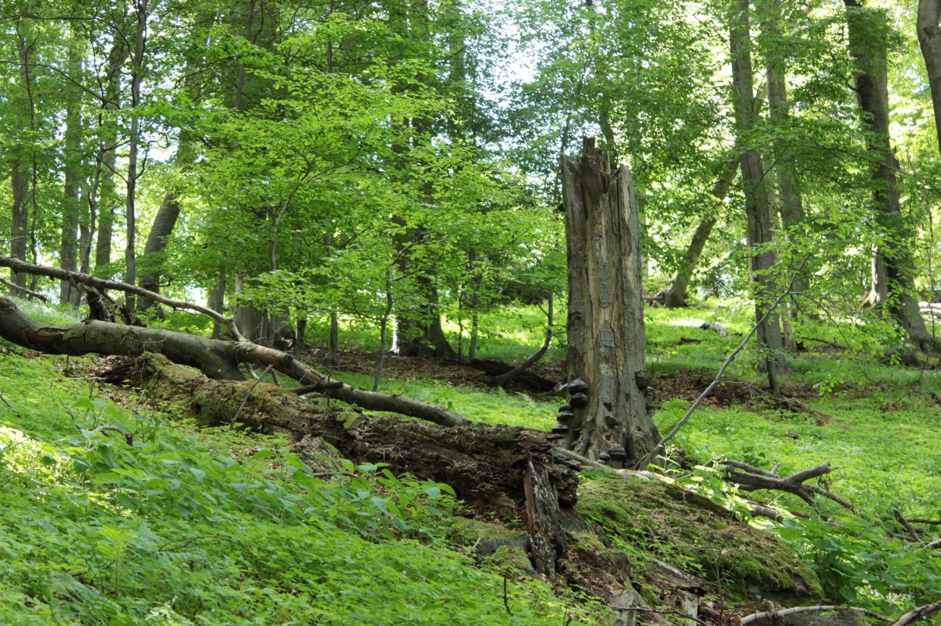 Természetesség visszaállítási kísérleti projktet indítana gazdasági rendeltetésű erdőkben az MTA
