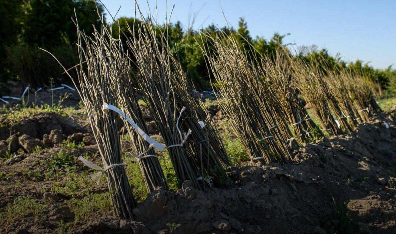 A fák útja a csemetekerttől a településig - tavaszi ültetések - videó