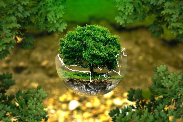 Mindannyian felelősséggel tartozunk a teremtett világunkért - a Környezetvédelemi Világnap üzenete