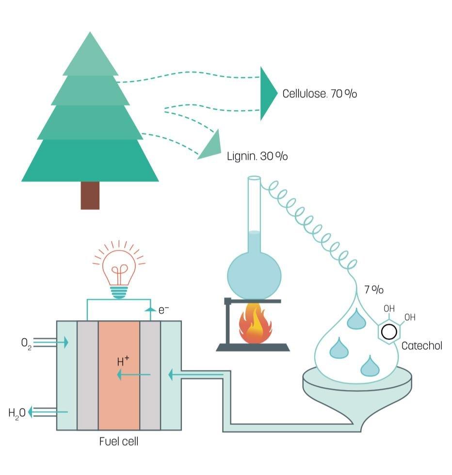 Fával váltanák ki a kőolajat a vegyiparban