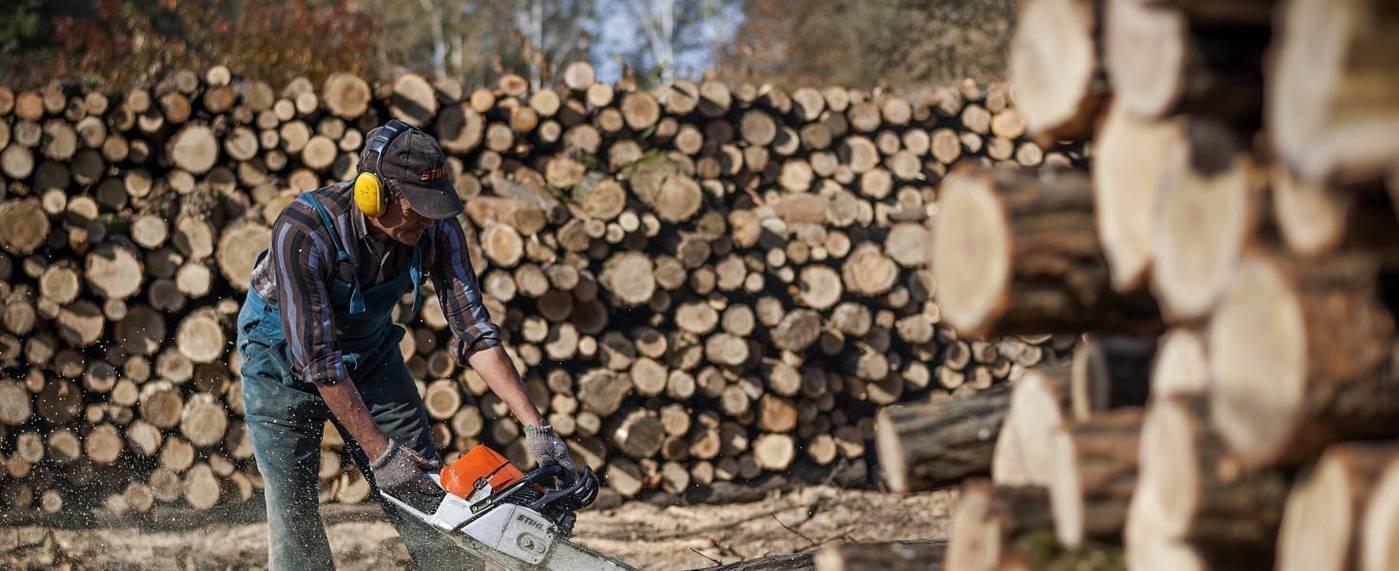 A vegetációs időszak kezdetével leállt a fakitermelés a Mecsekben is