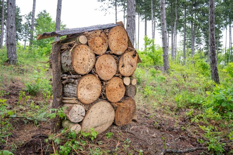 Kiemelten fontos a beporzók védelme és a biológiai sokféleség megőrzése