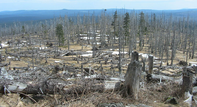 Több mint százezer hektár erdő pusztult ki Németországban