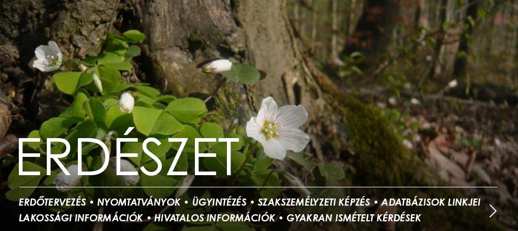 Elérhető az Erdőtörvény július 1-től hatályos változata