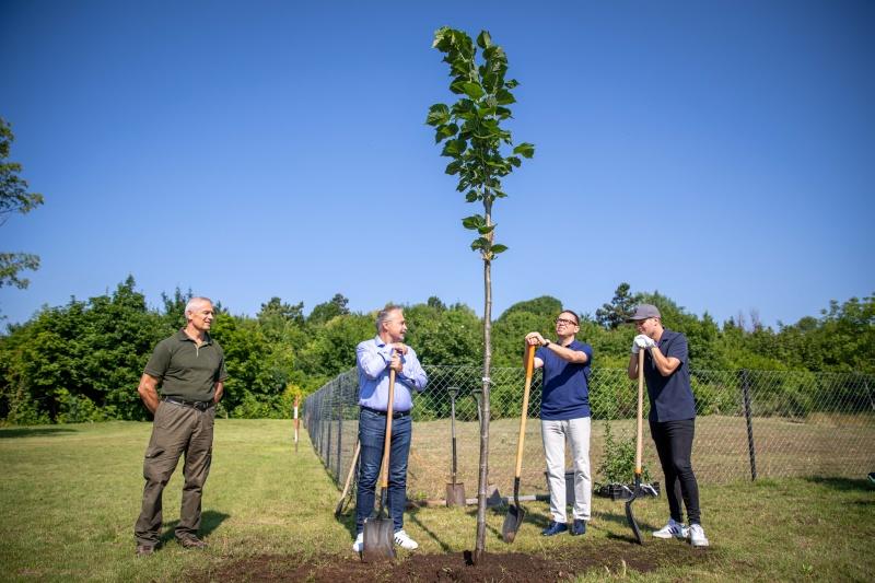 Fejlesztik a városi és települési erdőket