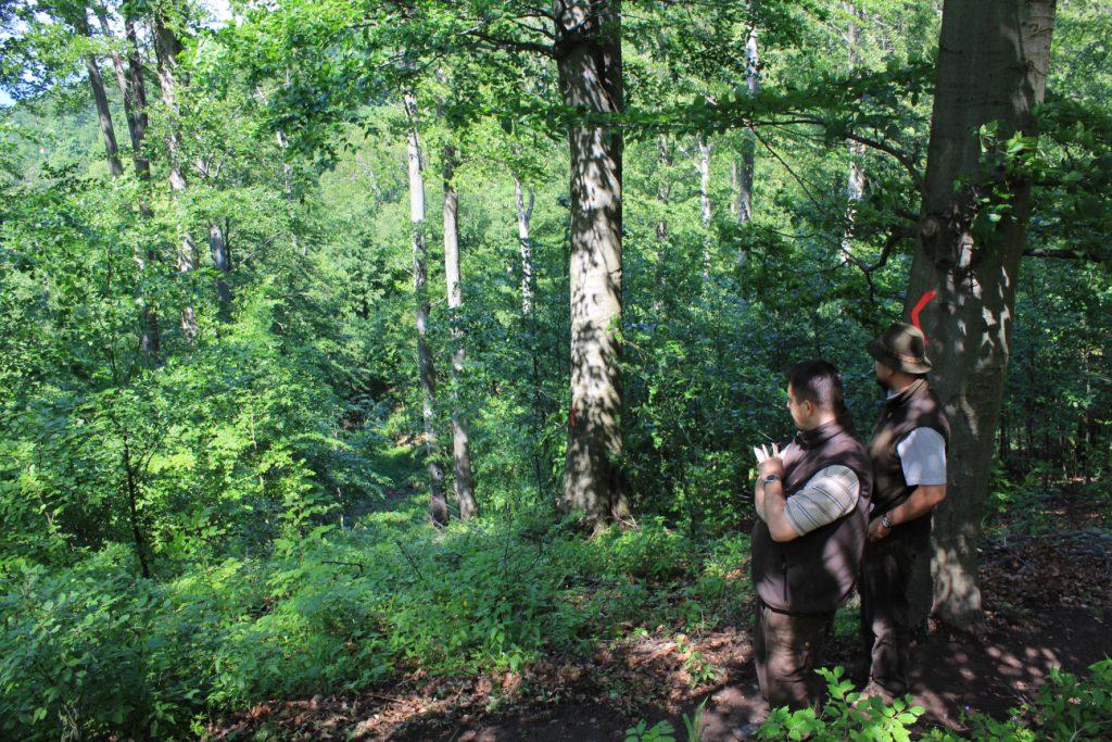 Újabb kormányzati lépés a magyar erdők fejlődéséért - rendeletek az örökerdők kezeléséről