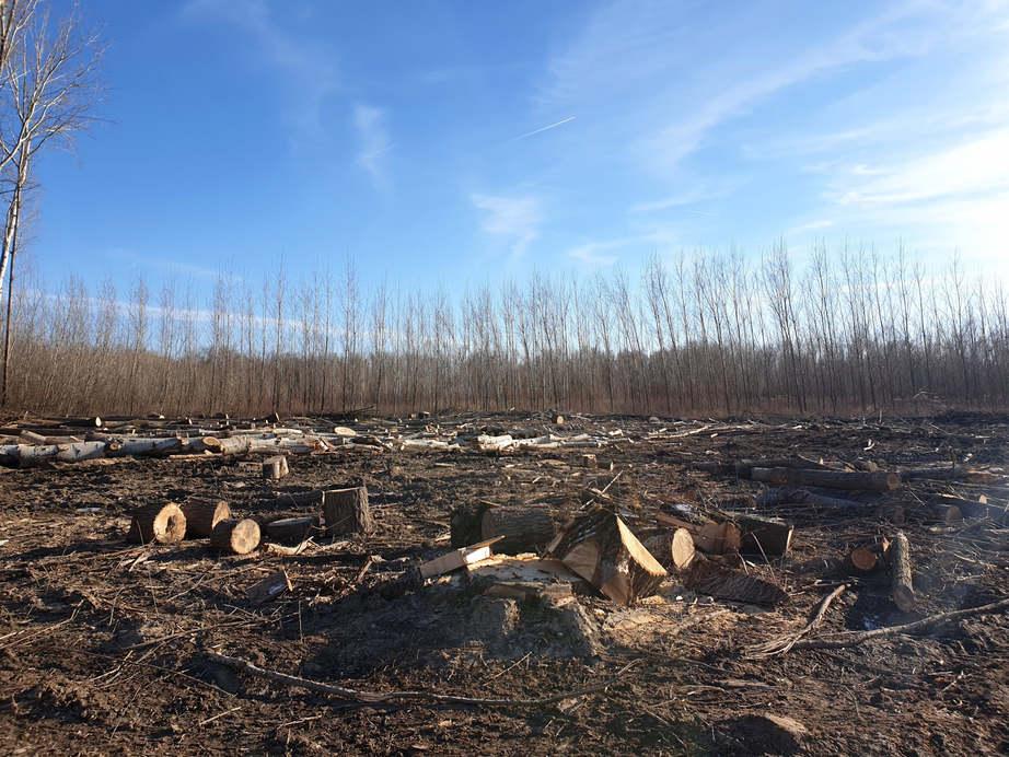 Erdőfelújítás zajlik a  györi Püspökerdőn