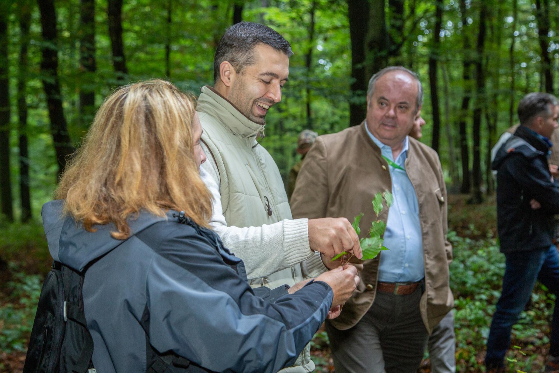 Erdők és klímavédelem találkozása a gyakorlati megoldásokban
