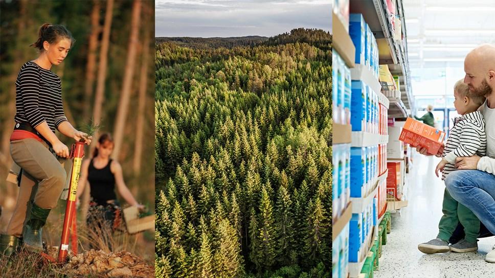 Erdészeti ágazati érdekérvényesítési lehetőségek Brüsszelben