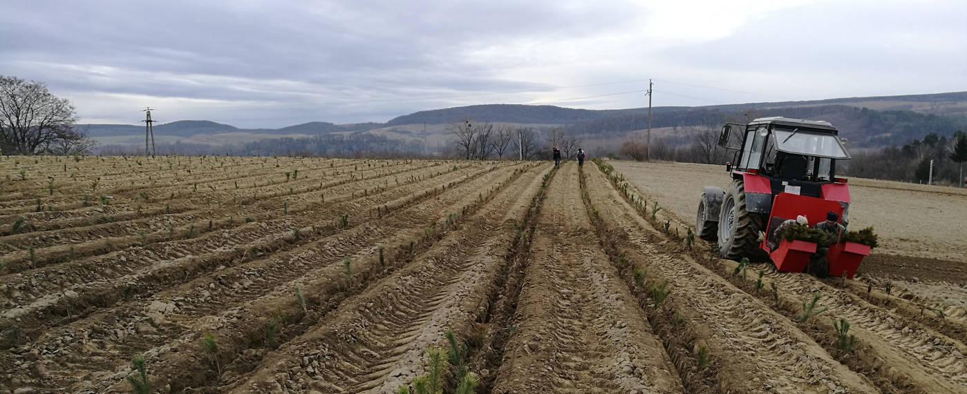 Egymillió csemetét ültet Fejér megyében a VADEX Zrt.
