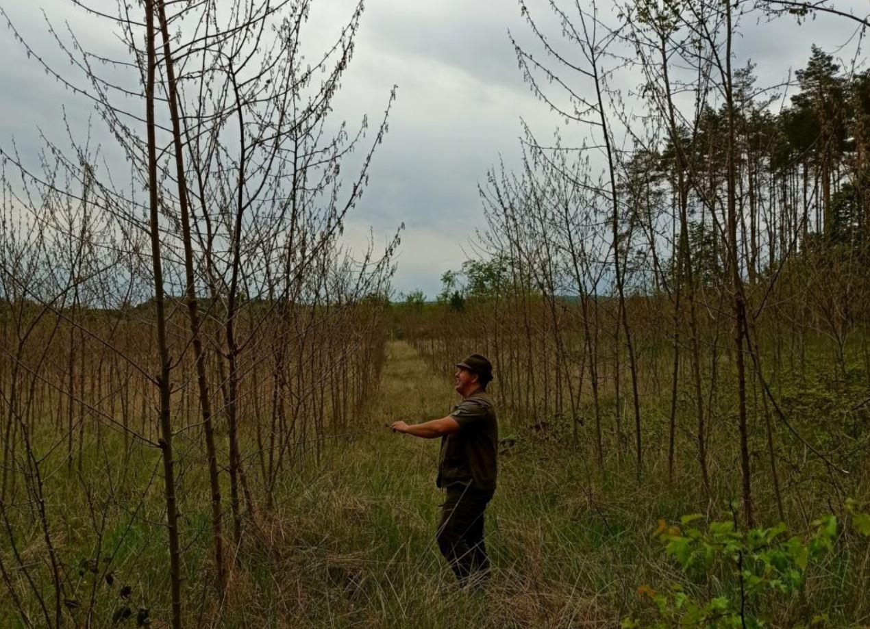 Közel 300 hektár erdőfelújítási és erdőtelepítési munka fejeződött be a Vértesi Erdő Zrt. területén