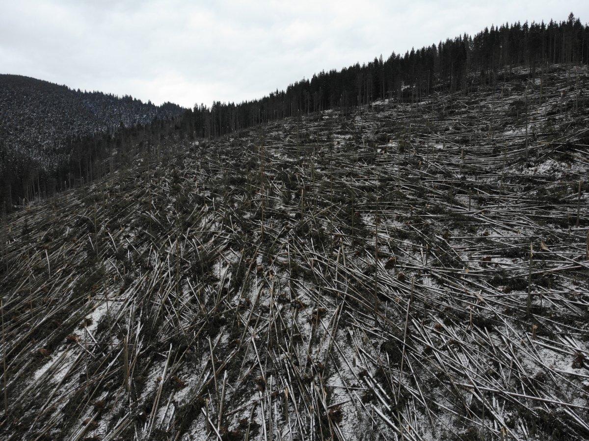 Egymillió köbméternyi fát döntött ki a szél Hargita és Maros megyében